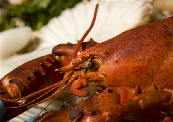 Photo:Close up of a lobster on the seafood counter