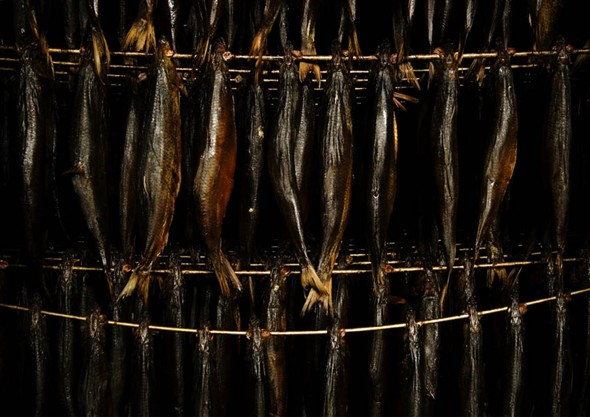 Photo:Close-up of the herring hung on speats during the smoking process