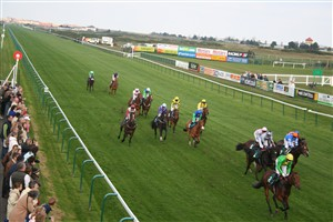 Photo:14 Horses racing on the home straight